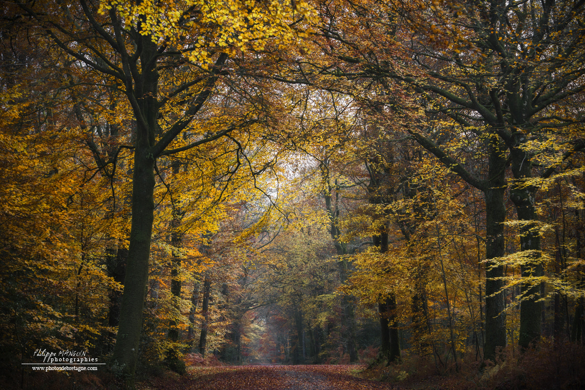 Photograph FALL by Philippe MANGUIN on 500px
