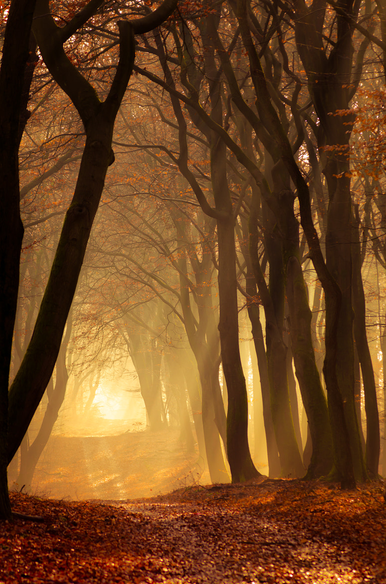 Photograph Speulderbos 19 by Mr. DESHAMER on 500px