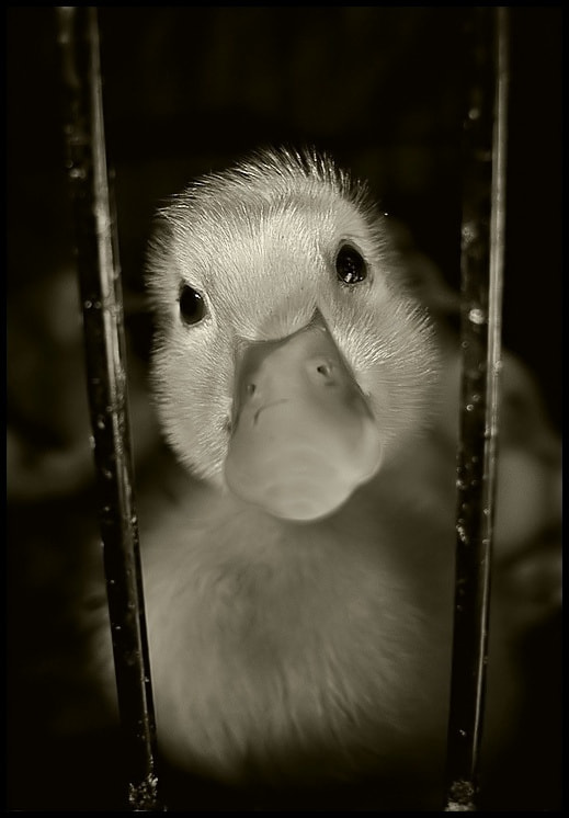 Photograph behind bars by Levent Yersal on 500px