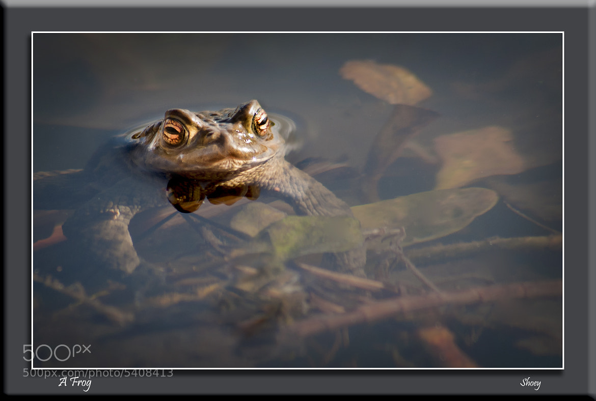 Photograph A Frog by Mark Shoesmith on 500px