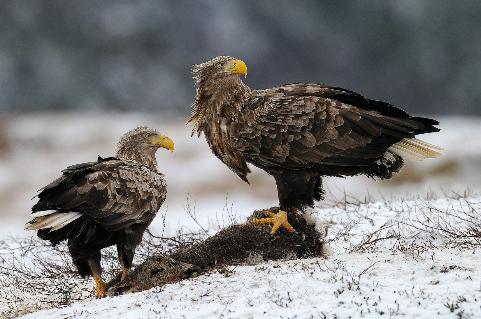 Photograph Husband and Wife by Harry  Eggens on 500px