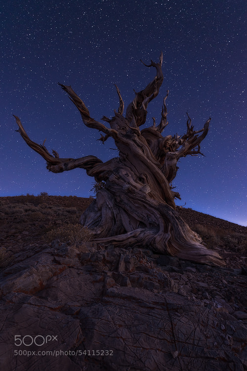 Photograph Celestial by David Thompson on 500px