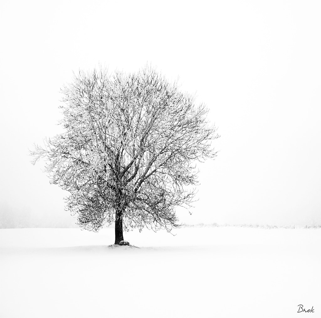 Photograph Some peace and some white by BrÖk  on 500px
