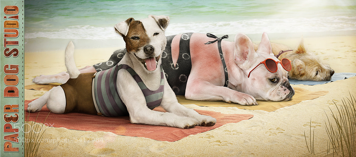 Photograph Paper Dog Days of Summer by PaperDogStudio on 500px