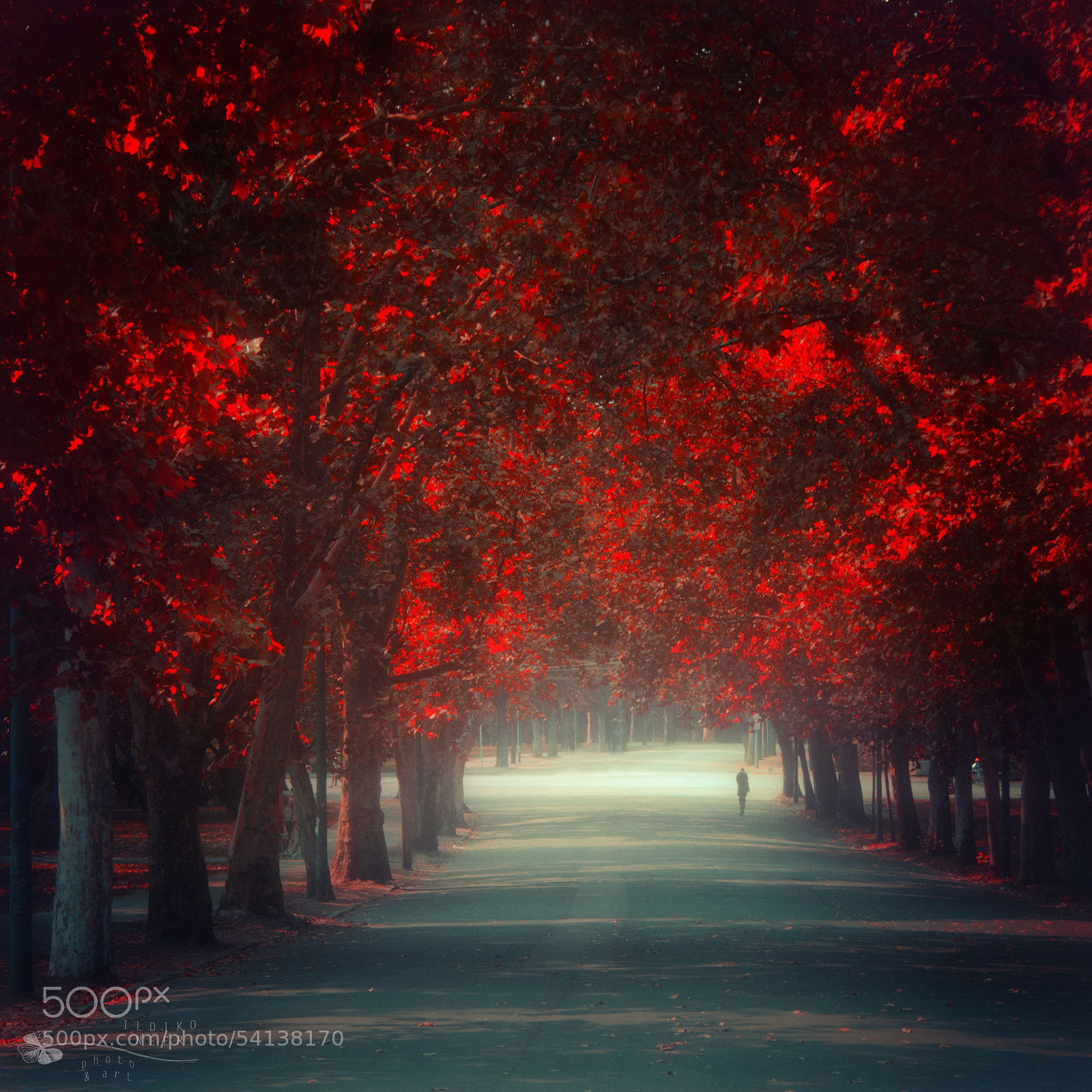 Photograph Let Me Go by Ildiko Neer on 500px