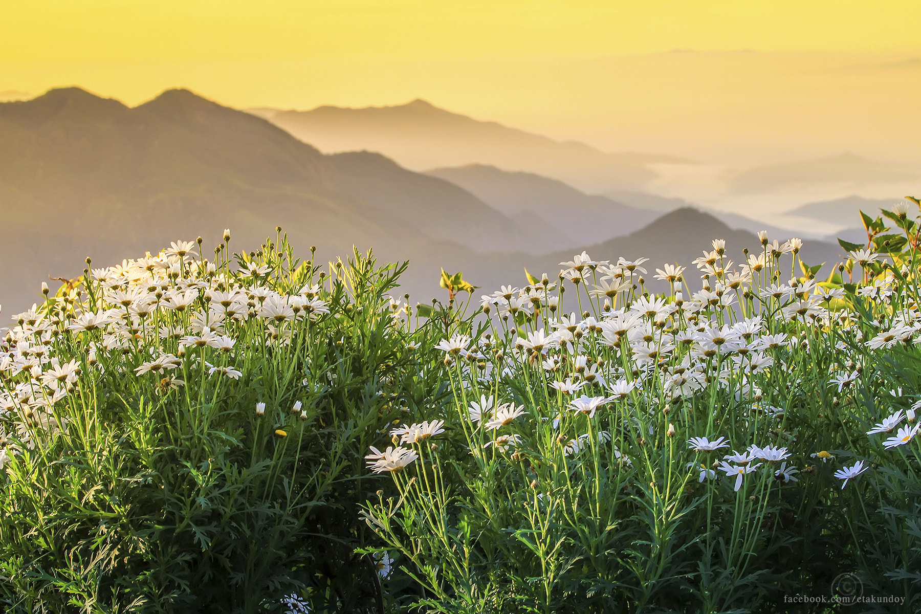 Photograph Flower and mountain by Tawan Chaisom on 500px