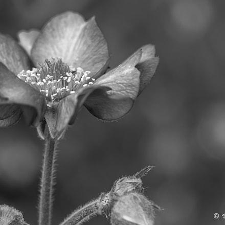 St Kilda Botanical Garden Vol.04