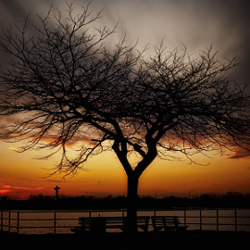 The Quiet Strength Of A Tree by Linda Karlin (teach50)) on 500px.com