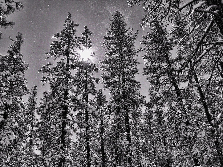 Photograph Untitled by Kimberly Kramer on 500px
