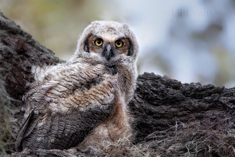 Photograph Soon to Leave the Nest by Christina Evans on 500px