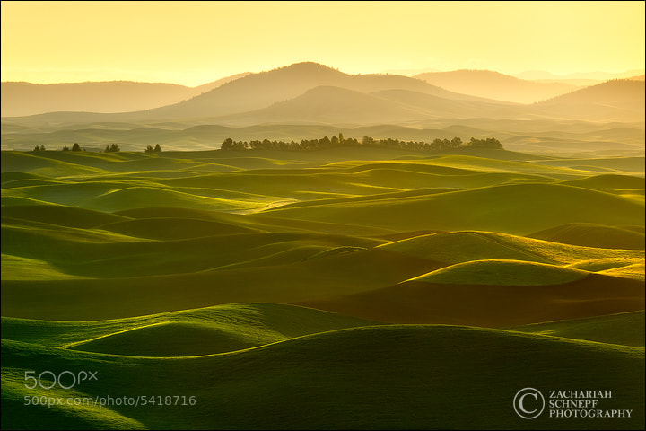Photograph Golden Palouse Waves by Zack Schnepf on 500px