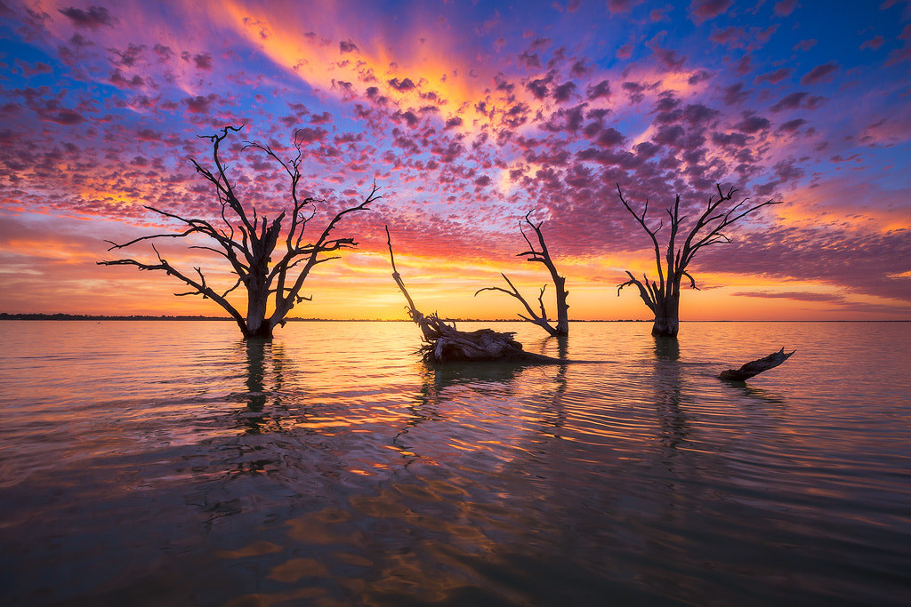 Photograph Color Explosion by Dylan Gehlken on 500px
