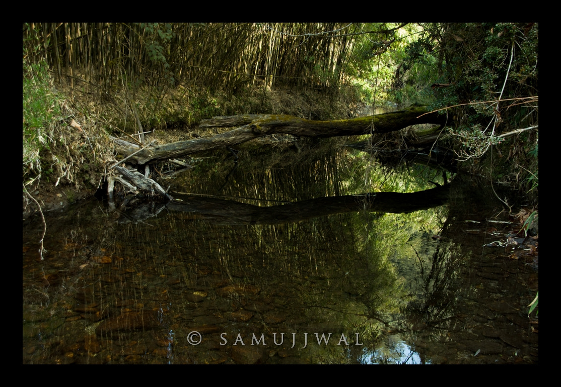 Photograph Reflection -  Neora River by Samujjwal Sahu on 500px