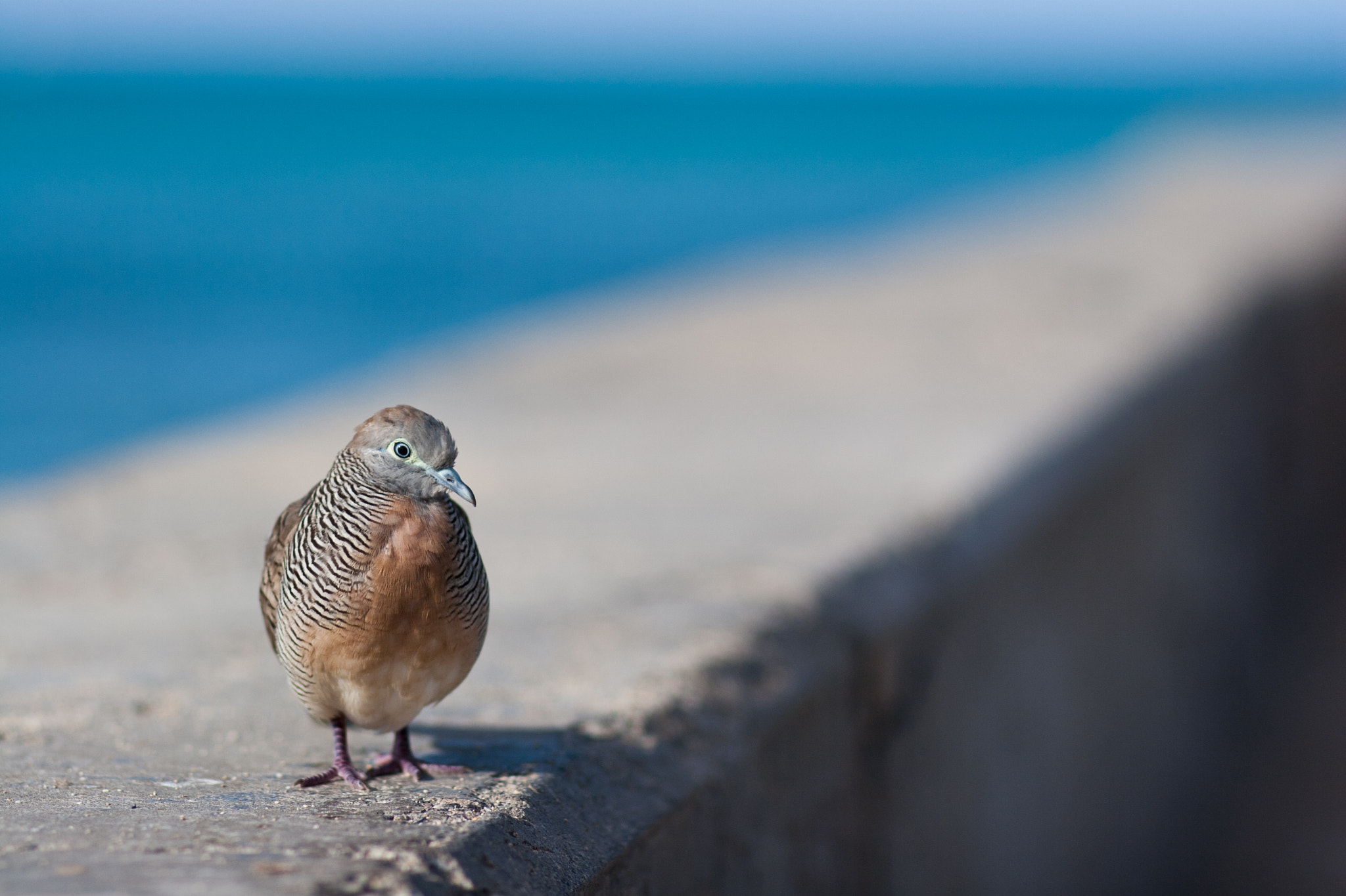 Photograph Beach Bum by  Douglas on 500px