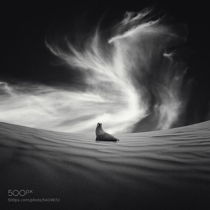 Photograph Desierto by Luis Beltrán on 500px