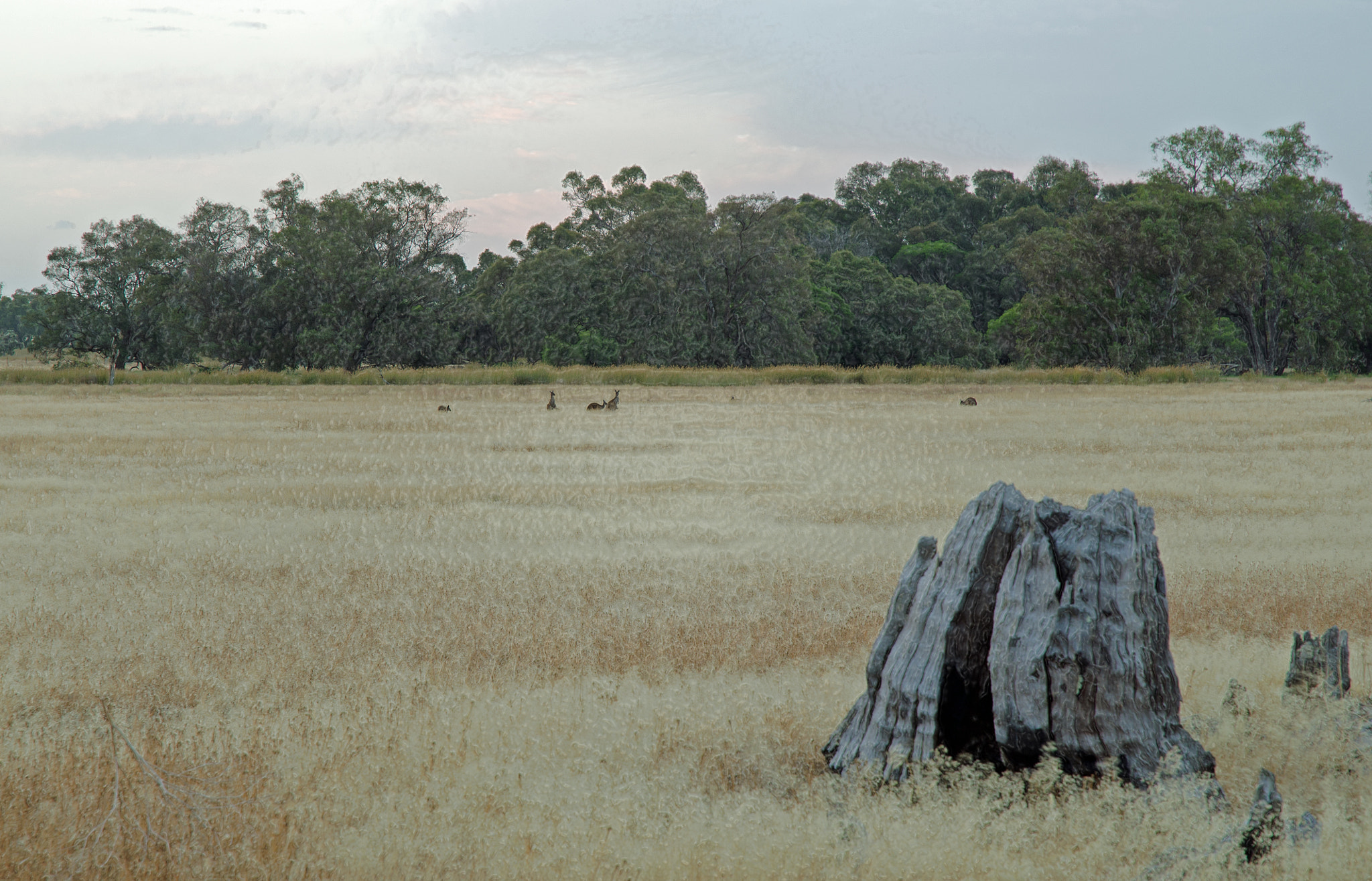 Photograph Grazing kangaroos by Peter Field on 500px