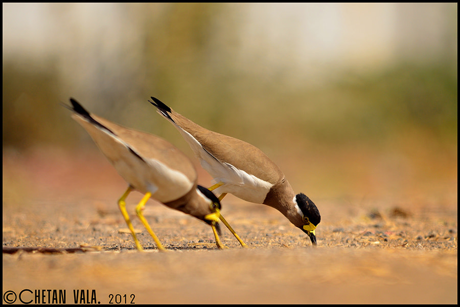 Photograph Together by chetan vala on 500px