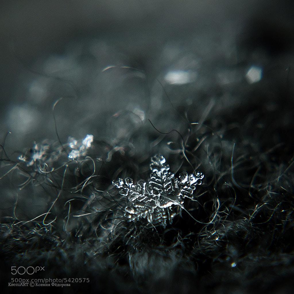 Photograph snowflake by Kseniya Fedorova on 500px