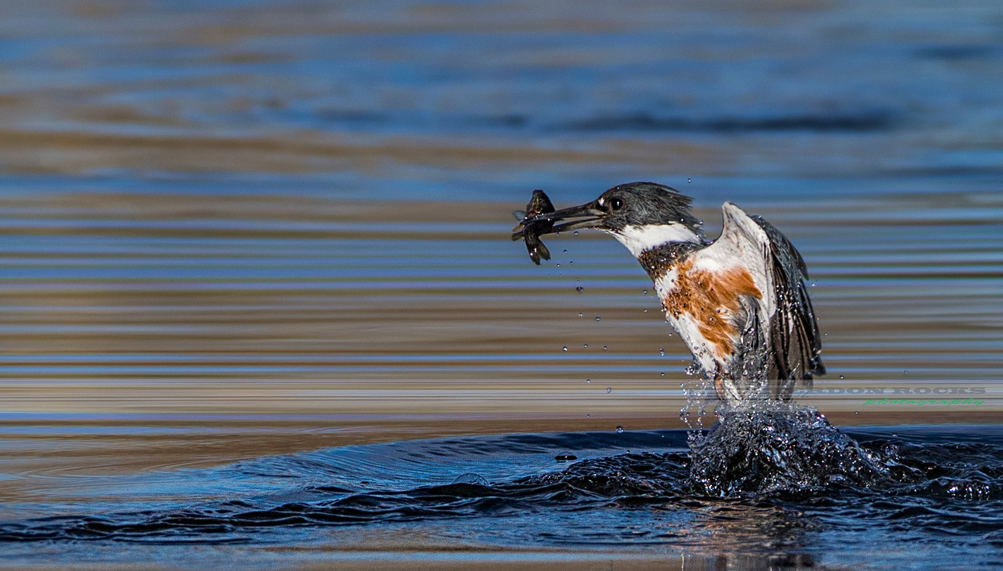 Photograph Fishing torpedo by VERDON ROCKS on 500px