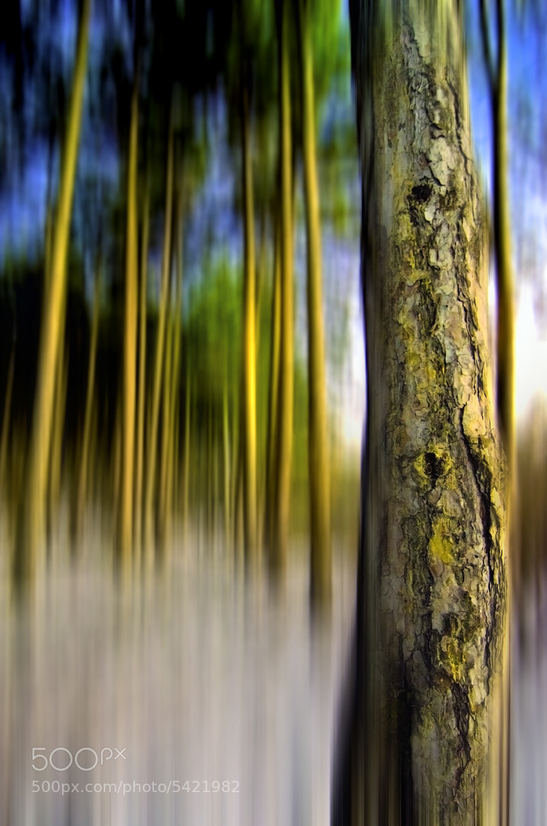 Photograph The Blurriness  Of The Night by Rilind H on 500px
