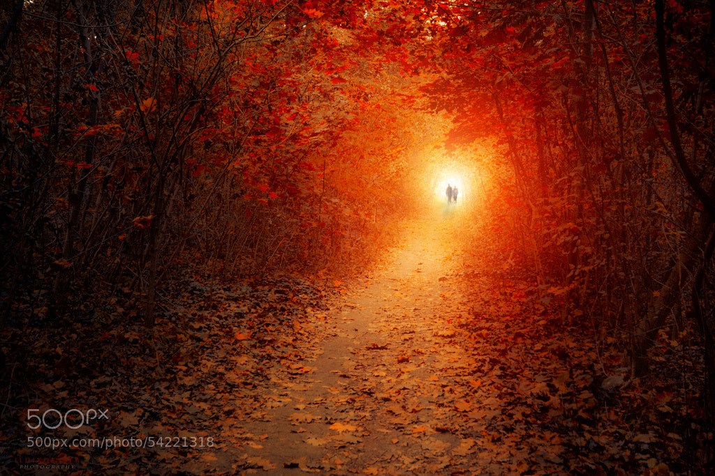 Photograph Two Of Us by Ildiko Neer on 500px
