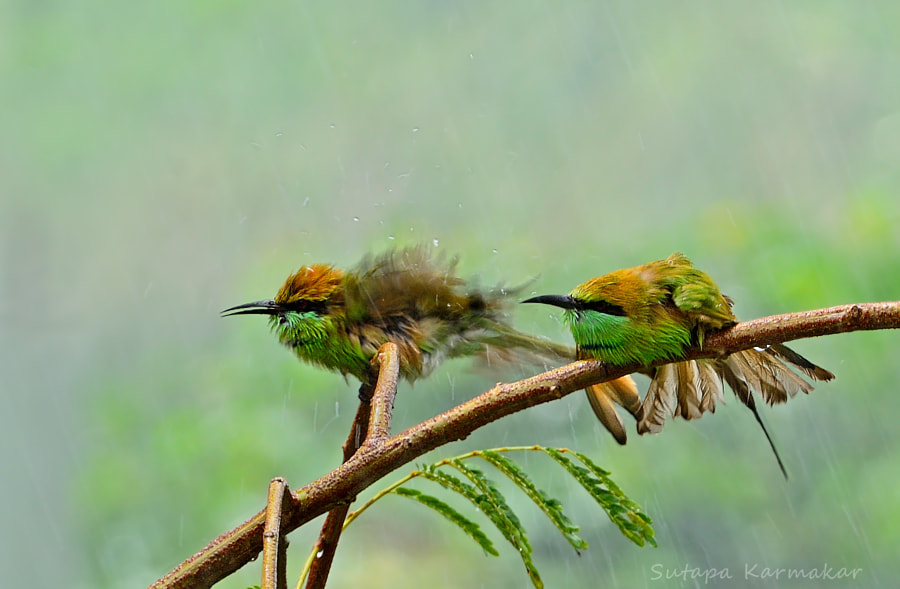 Huh...The Rain.. by Sutapa Karmakar on 500px.com