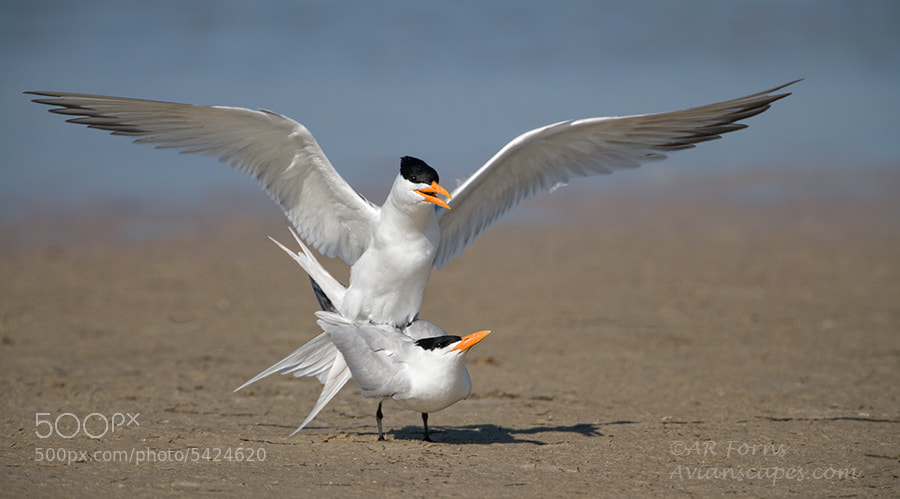 Photograph Mating time  by Alfred Forns on 500px