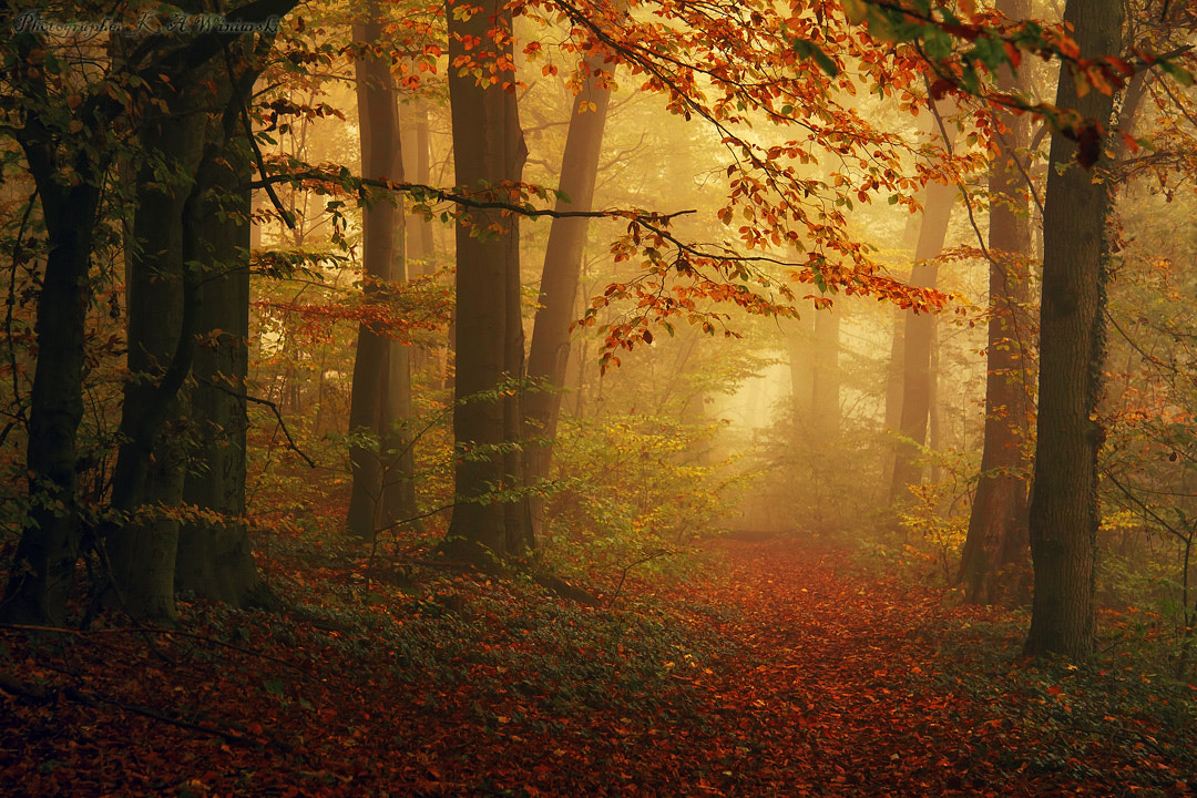Photograph in the forest by Krzysztof Winiarski on 500px