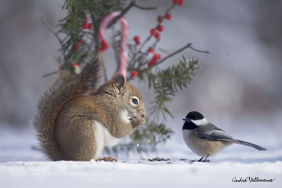 Photograph Red and Berry by Andre Villeneuve on 500px