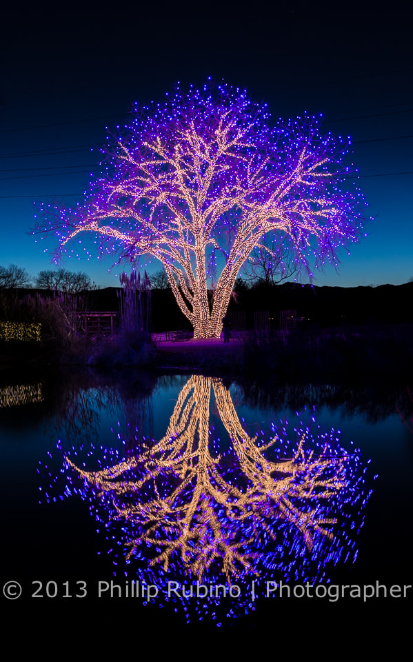 Photograph Beautifully decorated tree for the Holidays reflecting in a pond by Phillip Rubino on 500px
