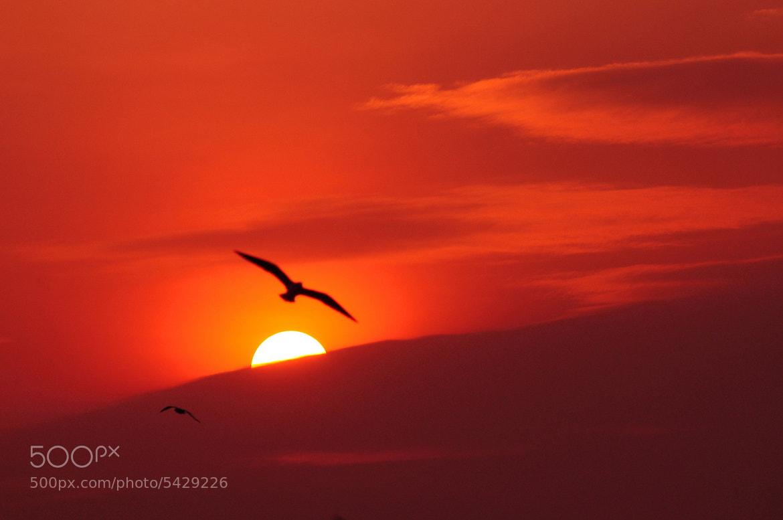 Photograph sunset by Luck Luckyfarm on 500px