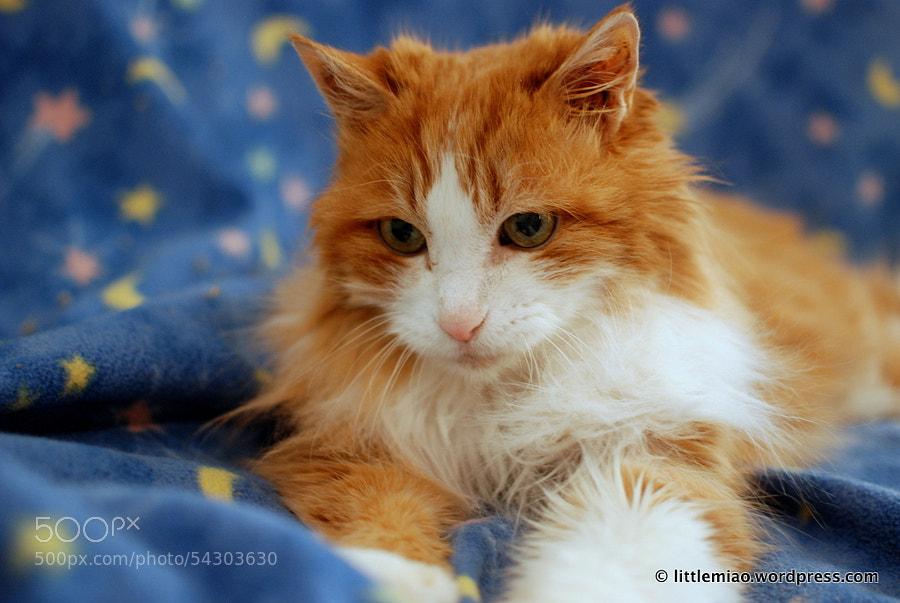Untitled by Miao Miao Miao on 500px.com