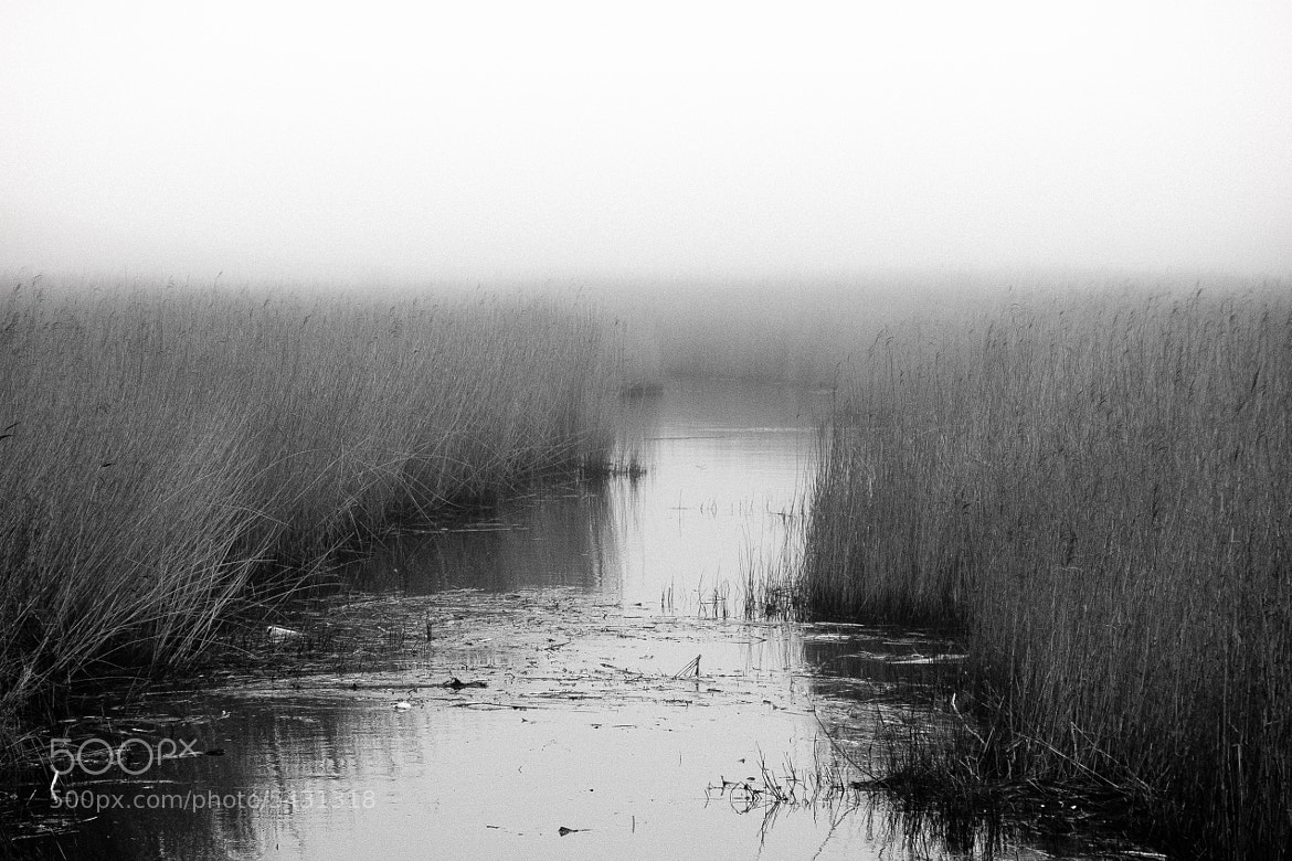 Photograph Ostsee-Schilf im Nebel by Christian Berg on 500px