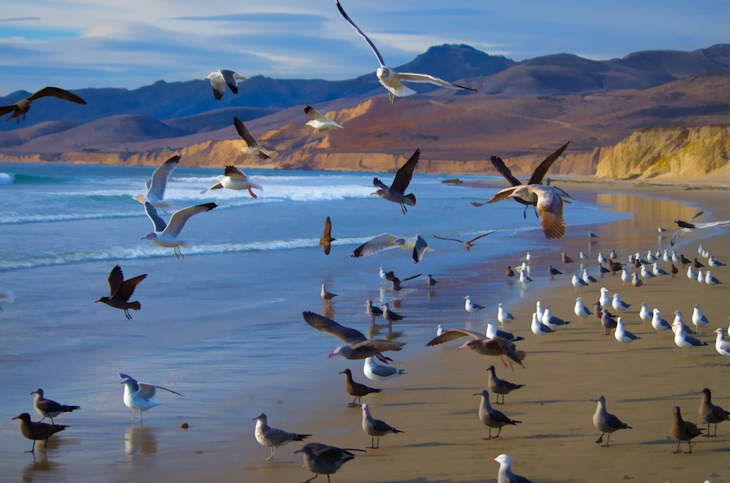 Photograph Gulls, Jalama Beach by Jerry Nichols on 500px