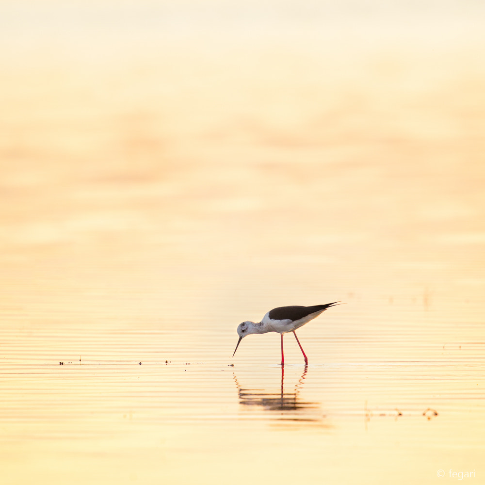 Photograph Breakfast Time by fegari . on 500px