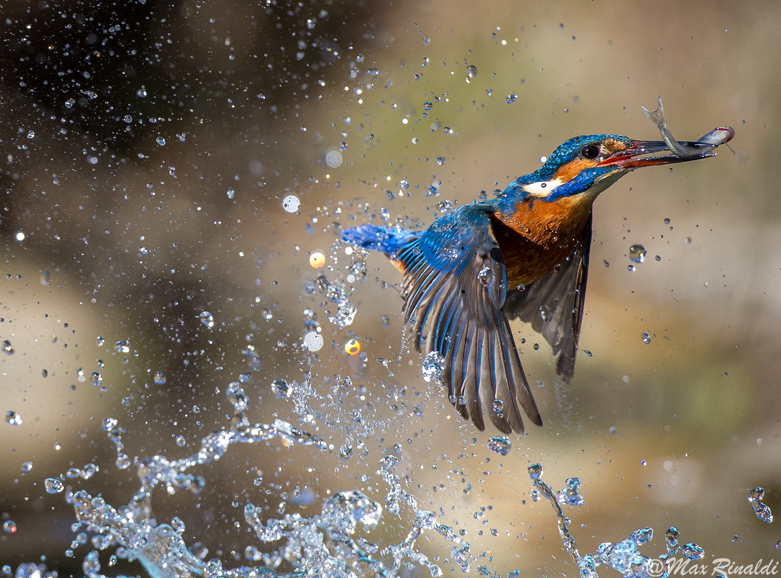 Photograph Show Time by Max Rinaldi on 500px