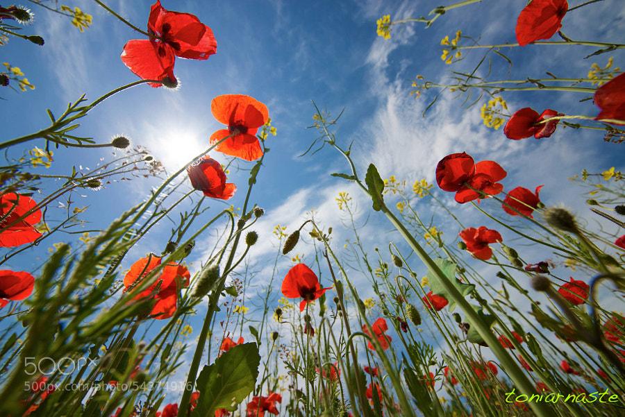 Photograph   spring breathe by Toni Arnaste Boixadera on 500px