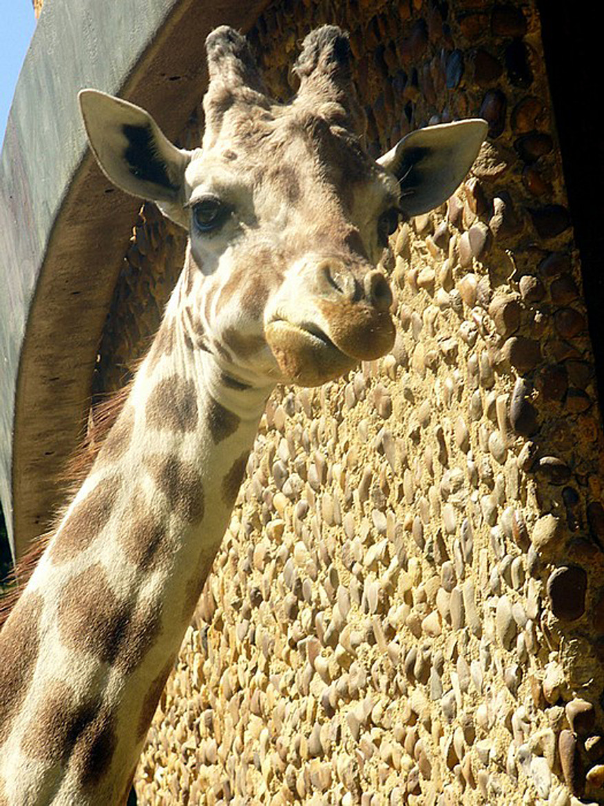 Photograph Giraffe 2 by Darlene Bayne on 500px