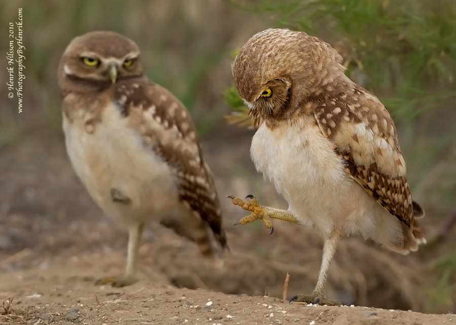 Photograph OMG, a FOOT!!! by Henrik Nilsson on 500px