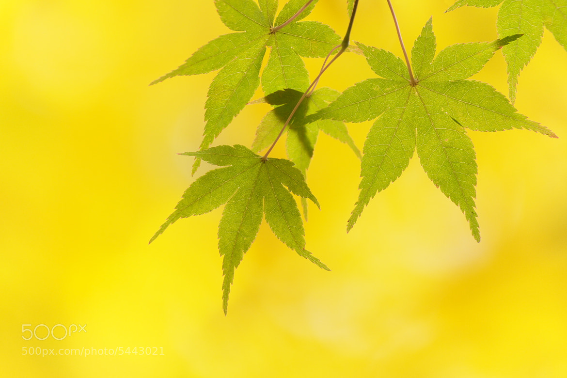 Photograph Yellow World by Tashi_Delek Nakata on 500px