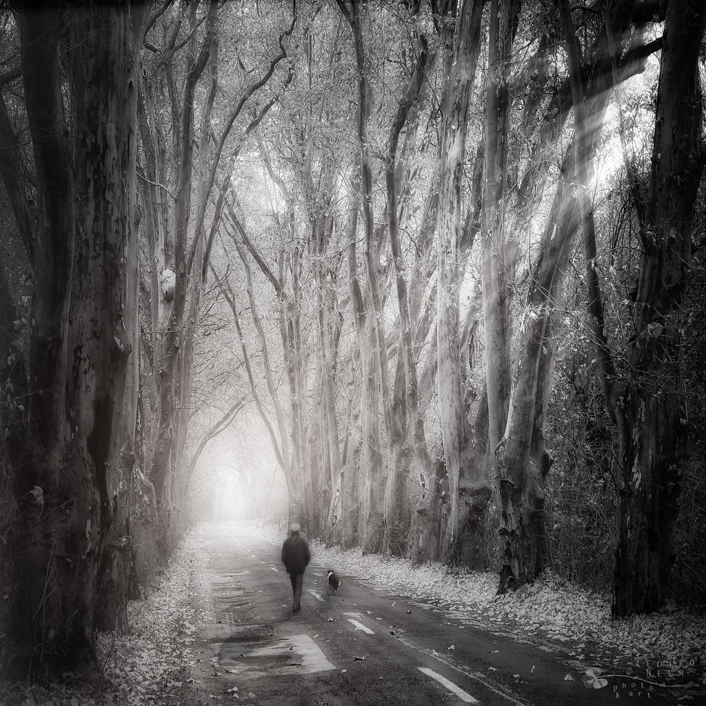 Photograph Side by Side by Ildiko Neer on 500px