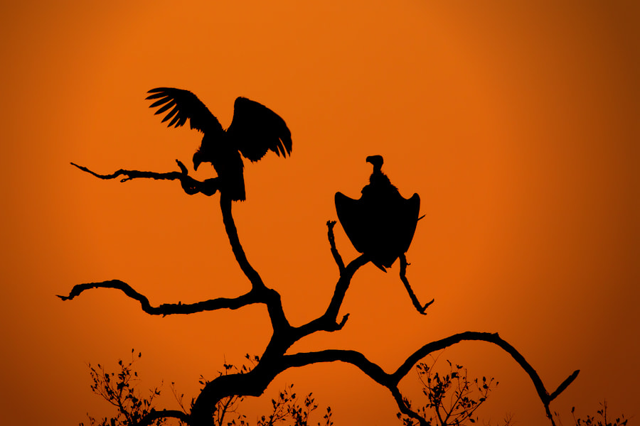 Photograph Vultures at Sunset by Mario Moreno on 500px