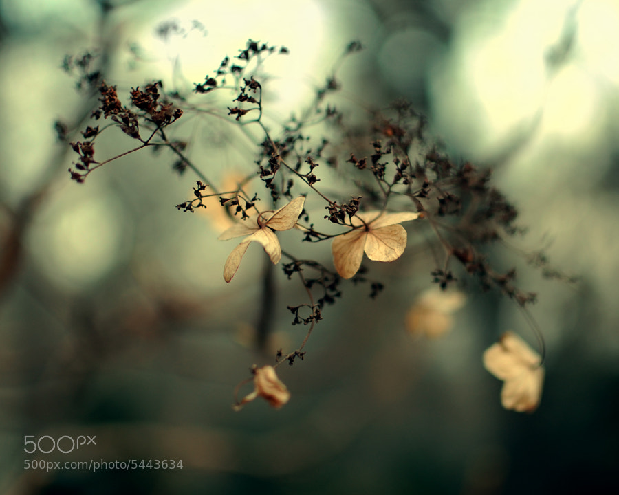 Untitled by Allana Mayer (allana)) on 500px.com