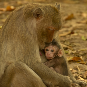 Babie Monkey by Manuel Benito Oter (mnlbnt) on 500px.com