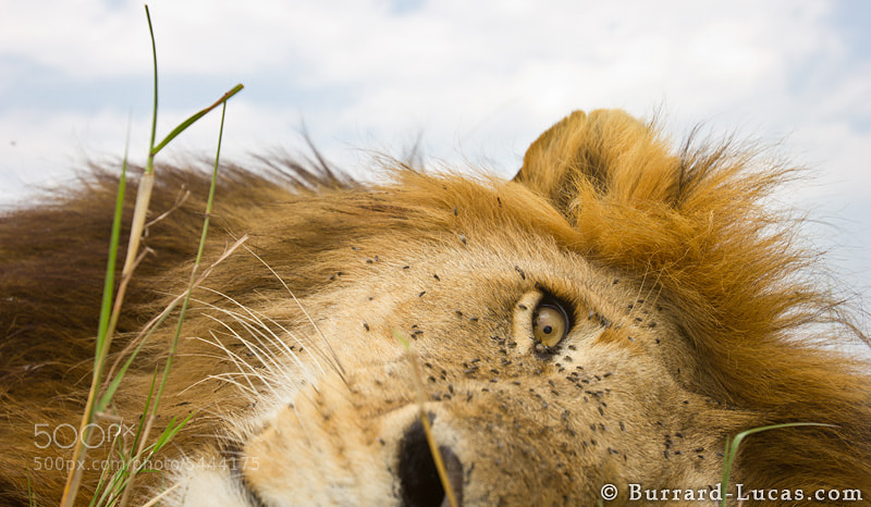 Photograph Awake by Will Burrard-Lucas on 500px