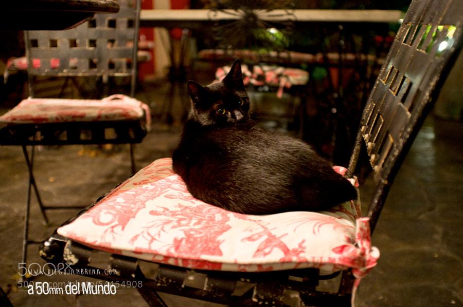 Gato, sonríe. by Diego Jambrina on 500px.com