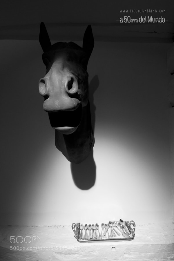 Caballo fino by Diego Jambrina on 500px.com