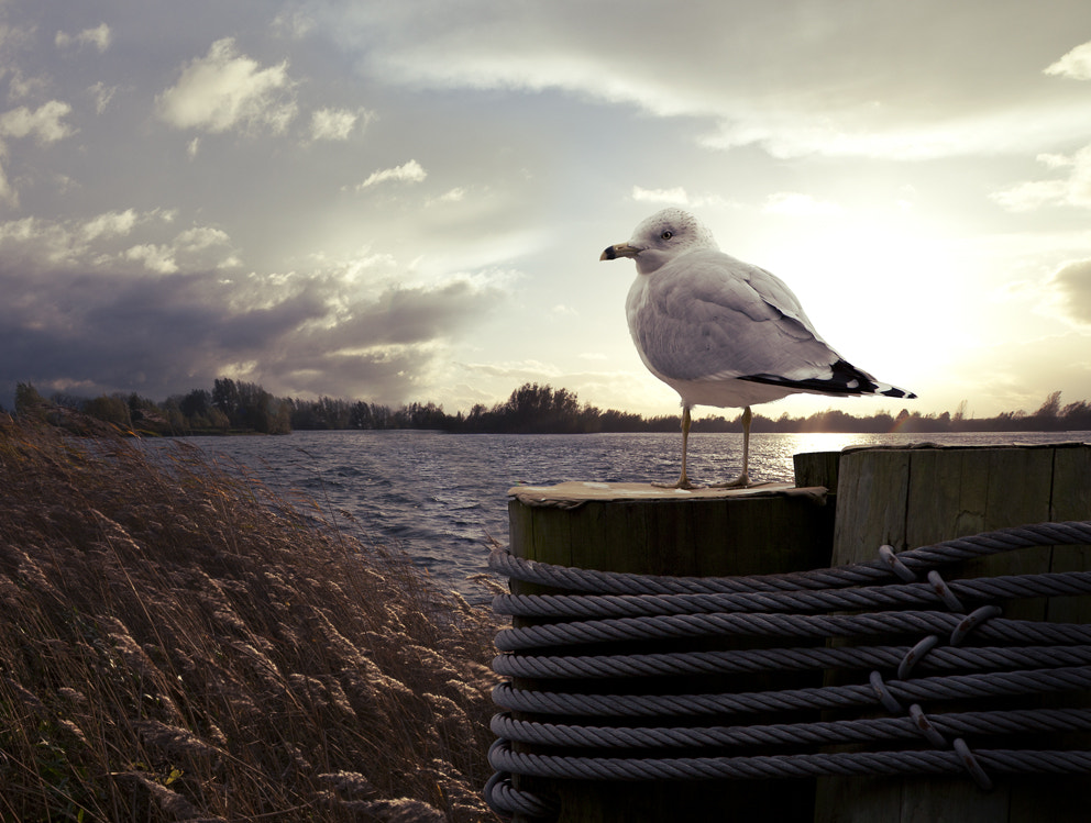 Photograph Seagull by Valentijn Tempels on 500px