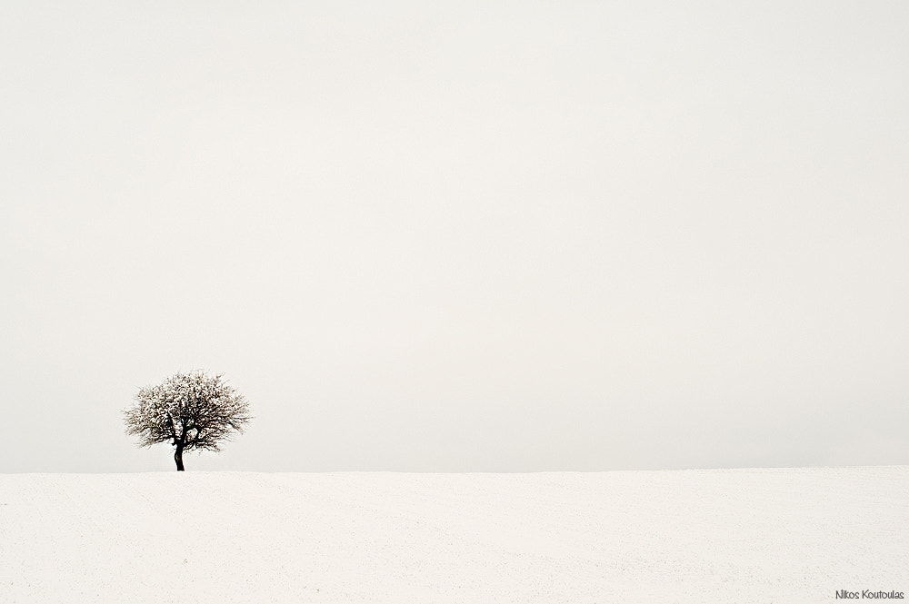 Photograph Winter tree by Nikos Koutoulas on 500px