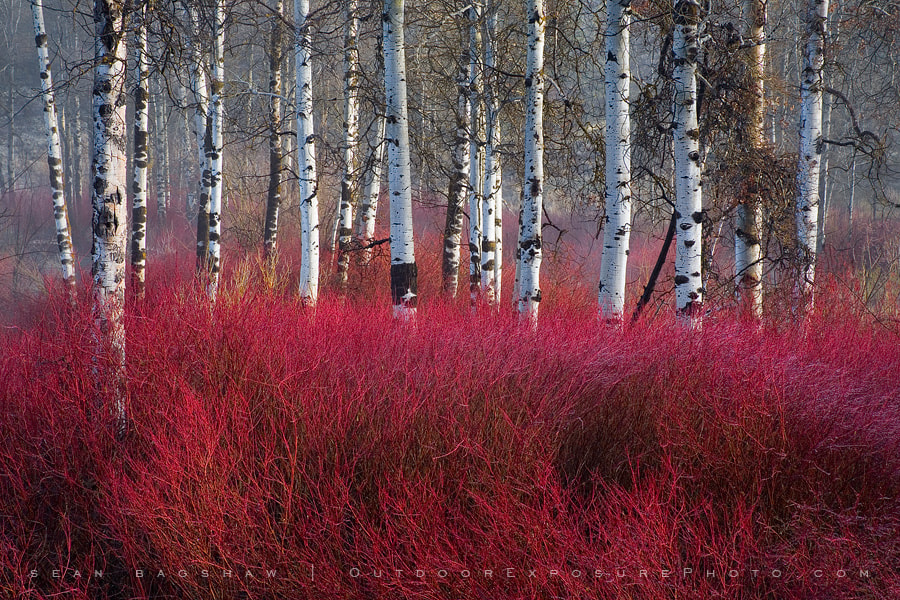 Photograph Red Willow Sea by Sean Bagshaw on 500px